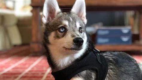 bill belichick shows soft side dog