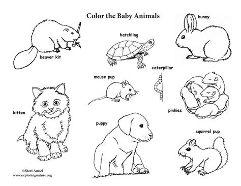 baby animals coloring pages baby animal labeled coloring page