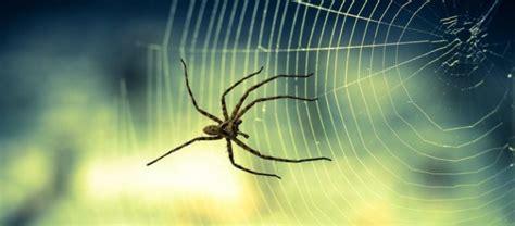 Kommen Spinnen Aus Dem Staubsauger Wieder Raus by Sterben Spinnen Wenn Sie Einsaugt Ostseesuche