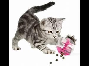 Jouets Pour Chats D Appartement : comment fabriquer un jouet pour chat fr youtube ~ Melissatoandfro.com Idées de Décoration