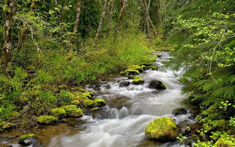 Forest River Wallpaper Rivers Nature Wallpapers In Jpg