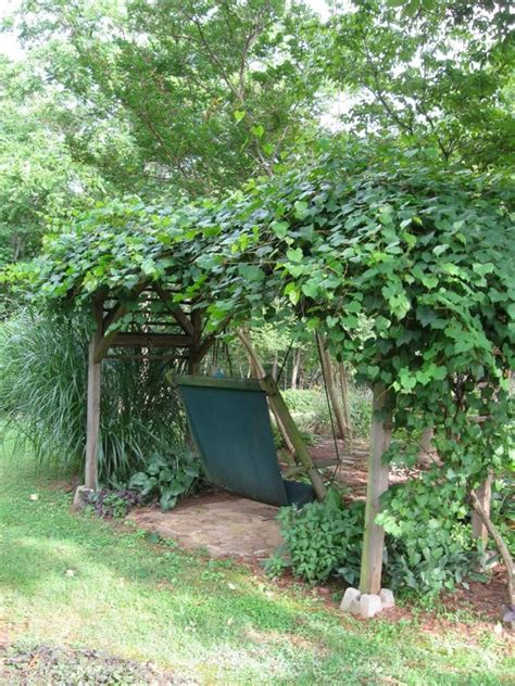 muscadine trellis design grape vines arbors and vines on pinterest