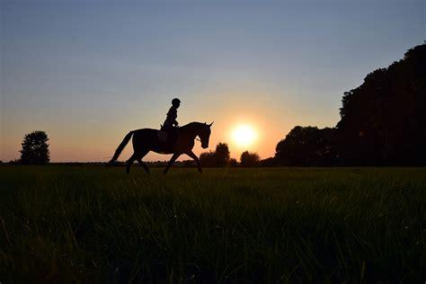 ride trot sunset  photo  pixabay