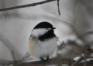 Ontario Winter Birds