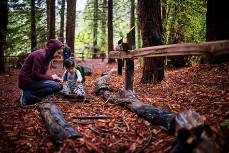 redwood regional park how to search for salamanders in 959 | salamander redwood regional