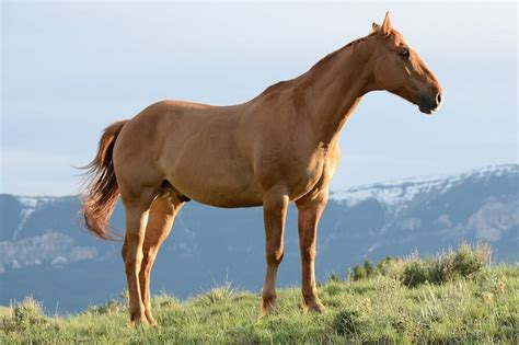 blooded cold horses warm difference stallion vs breed