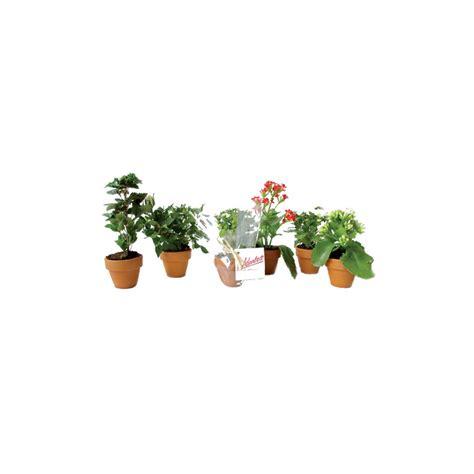 plante fleurie plante fleurie with plante fleurie with plante fleurie plantes plante fleurie