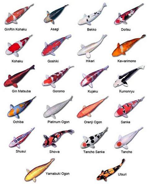 types  koi fish koi chart koi pinterest pez