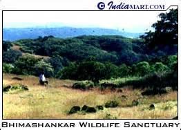 bhimashankar wildlife sanctuary wildlife  maharashtra