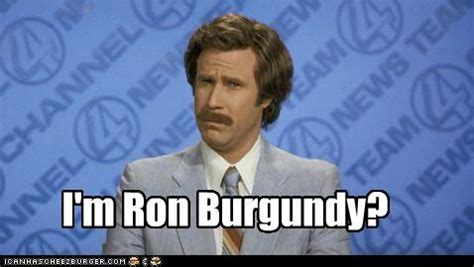 Ron Burgundy Memes - 11 best you can t fix stupid images on pinterest funny stuff ha ha and funny things