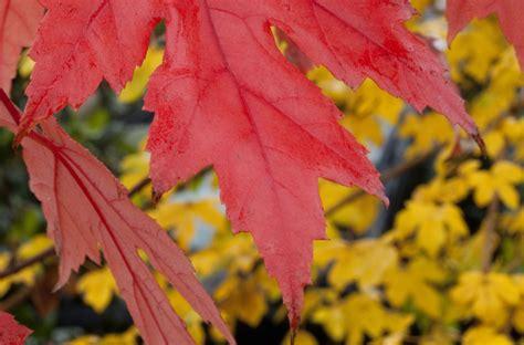 autumn theme templates  microsoft office