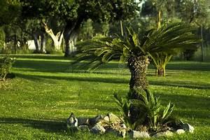 Palmier De Jardin : jardin avec peu de palmier et gazon images stock image ~ Nature-et-papiers.com Idées de Décoration