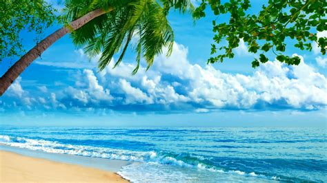 oboi priroda  palma volny oblaka fotoshop na