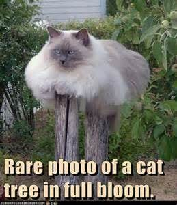 Best 25 Cat memes ideas on Pinterest