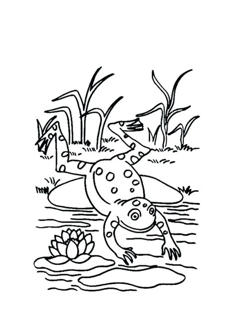 Cycle Of A Frog Coloring Page Cycle Of A Frog Coloring Page Keralanews Info