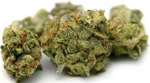 january 2013 test cannabis 2013