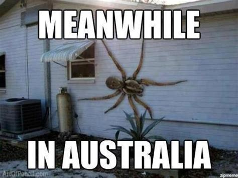 Spider In House Meme - fake photo alert giant spider on the side of a house