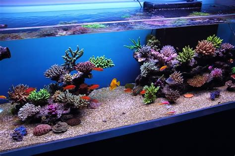 marine aquascaping techniques today professional demo reef aquascaping techniques by