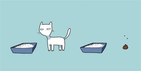 Kaķis ir nepieciešams katrā mājā. Lūk, kāpēc… - Puaro.lv