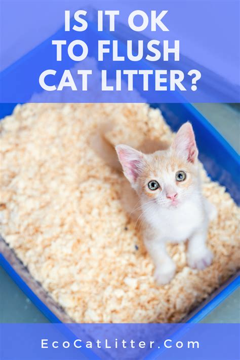 can you flush cat poop without litter