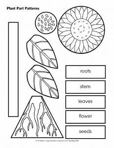 This Resource Could Be Incorporated Into A Plant Unit In Kindergarten Or 1st Grade  This Is A
