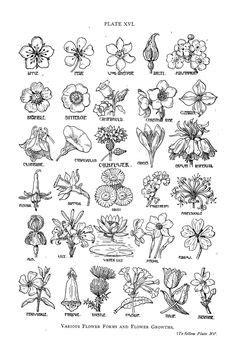 Vector Medicinal Herbs Collection #Medicinal#Vector#Herbs#