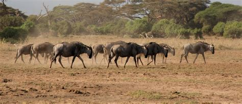 Best Safaris In Kenya 5 Best Safaris In Kenya To Visit Memorable Safaris