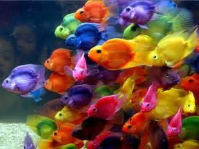 Ebay Desktop Computer Windows 7 by Color Fish Hd Wallpaper Animals Wallpapers
