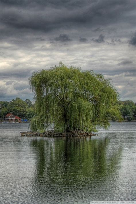 weeping willow tree wallpaper gallery