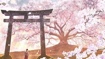 Sakura Blossom Anime Japanese Landscape Clothes Wallpapers