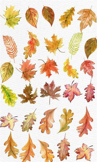 Leaves Watercolor Clipart Fall Autumn Leaf Clip