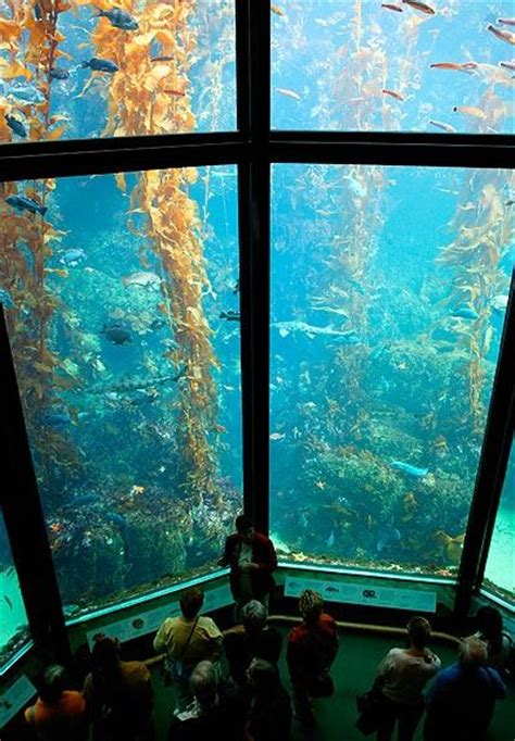 17 best ideas about monterey bay california on monterey bay monterey bay aquarium
