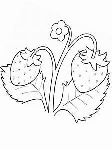 Gemüse Bilder Zum Ausdrucken : ausmalbilder malvorlagen erdbeere kostenlos zum ausdrucken m rchen aus aller welt der ~ Buech-reservation.com Haus und Dekorationen