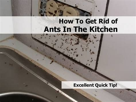 ants in kitchen how to get rid of ants in the kitchen