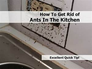 how do i get rid of ants in my bathroom image bathroom 2017 With how to get rid of ants in your bathroom