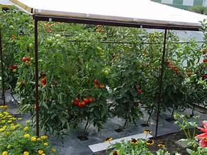 Tomaten Regenschutz Selber Bauen : meine tomatenwelt freude am garten ~ Frokenaadalensverden.com Haus und Dekorationen