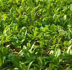 Was Macht Man Mit Amaryllis Nach Der Blüte : naturheilkunde diese hausmittel wachsen in jedem garten ~ Lizthompson.info Haus und Dekorationen