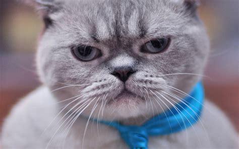 可爱小猫咪图片电脑壁纸下载免费_桌面壁纸_电脑桌面壁纸高清_图片大全_桌面背景壁纸图片_酷图吧壁纸下载