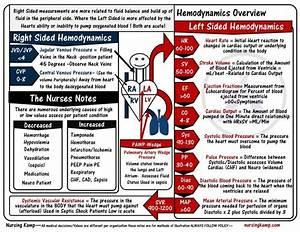 My Level 1 Sheet Covering Normal Hemodynamics Pulse
