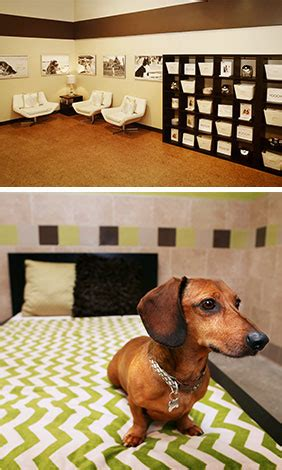 norwalk dog boarding doggie daycare dog spa pooch hotel