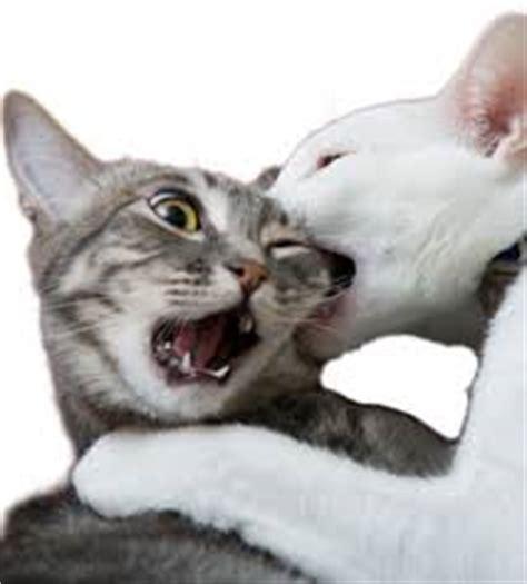fiv feline immunodeficiency virus