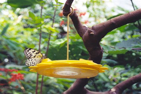 diy butterfly feeder 13 diys to make a butterfly feeder guide patterns