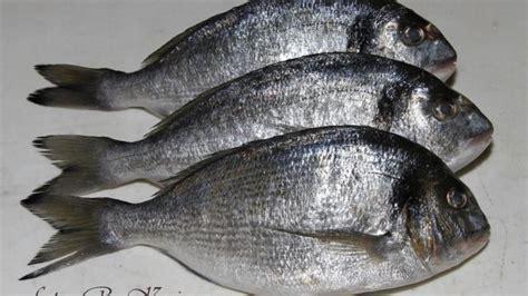 species  fish  change  sex science