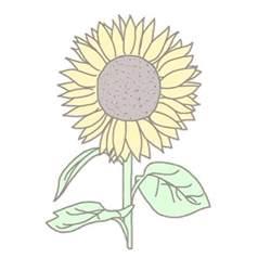 Sunflower Transparent Tumblr