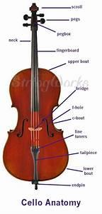 Anatomy Of A Violin  Viola  And Cello  Parts Diagram