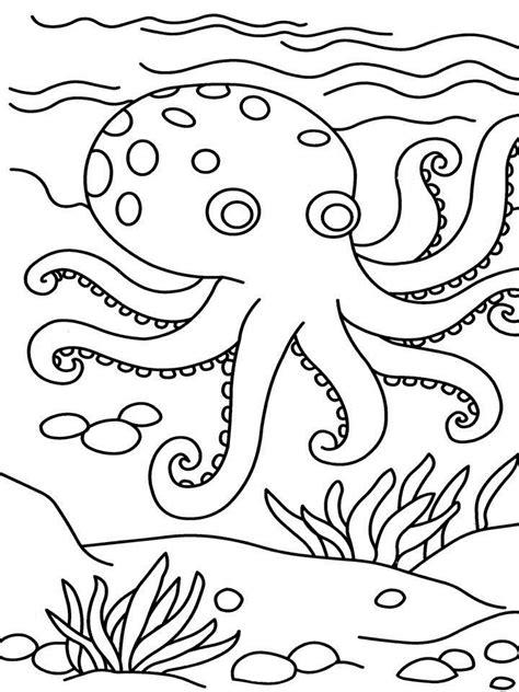 desenhos de polvos  imprimir  colorir animais