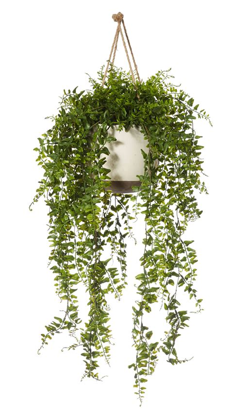 10 Reasons Why You Should Embrace Fake Plants. Living Room Design Ideas Small Apartment. Amazon Com Living Room Furniture. Divider In Small Living Room. Arabic Style Living Room Ideas. Small Living Room Design Ideas Pictures. Wall Decor Ideas For Living Room Pinterest. Rustic Contemporary Living Room. Living Room Decorating Ideas Blue Sofa