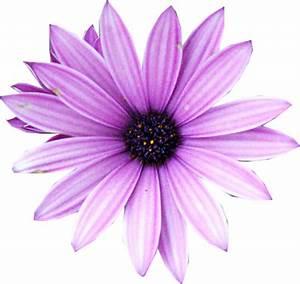 purple flower psd vector images vectorhqcom With purple psd