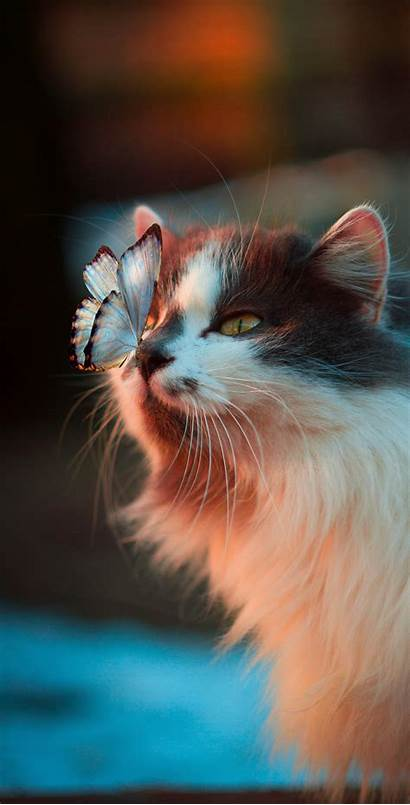 Cat Wallpapers Cats Iphone Phone Mobile Butterfly