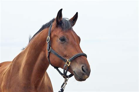 muskelaufbau beim pferd pferde richtig reiten ehorses